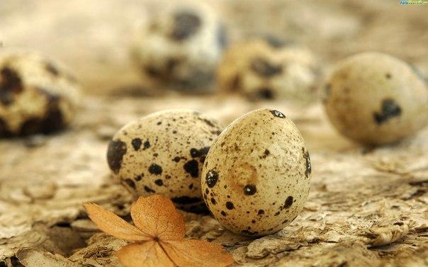 Перепелиные яйца для нашей красоты